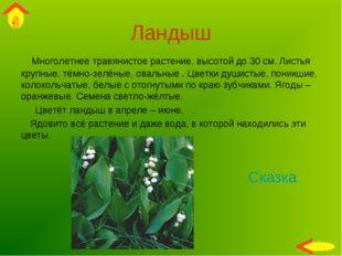 Ландыш Многолетнее травянистое растение, высотой до 30 см. Листья крупные, тё