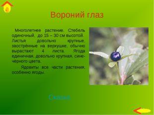 Вороний глаз Многолетнее растение. Стебель одиночный, до 15 – 30 см высотой.