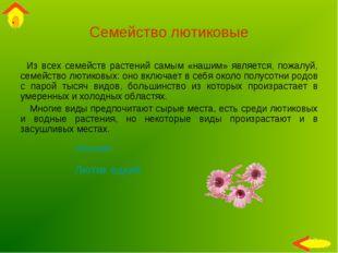 Семейство лютиковые Из всех семейств растений самым «нашим» является, пожалуй