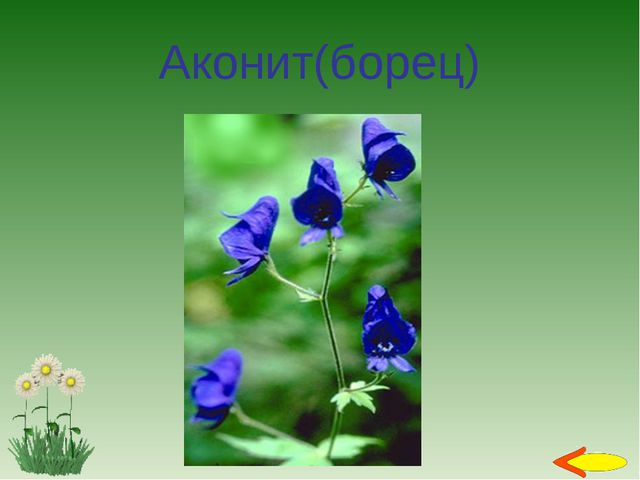 Аконит(борец)