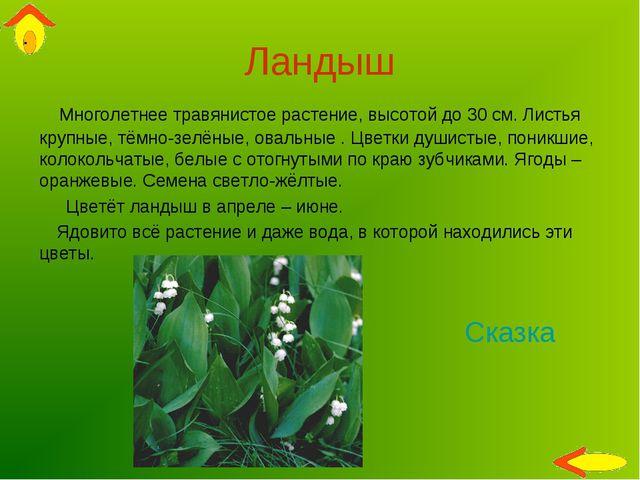 Ландыш Многолетнее травянистое растение, высотой до 30 см. Листья крупные, тё...