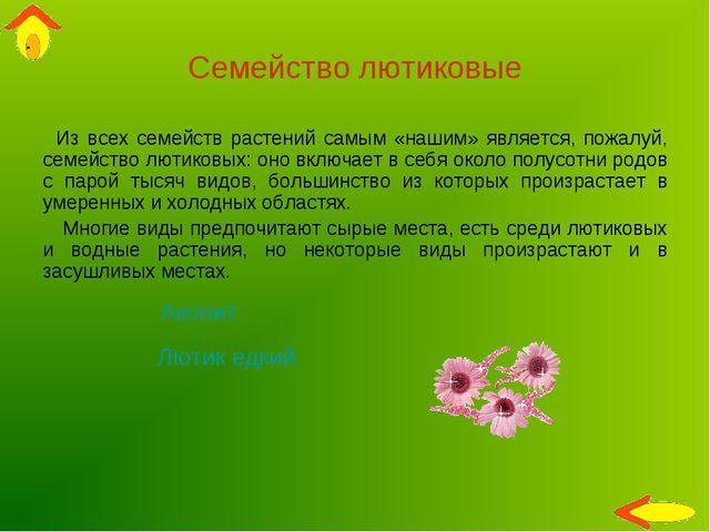 Семейство лютиковые Из всех семейств растений самым «нашим» является, пожалуй...