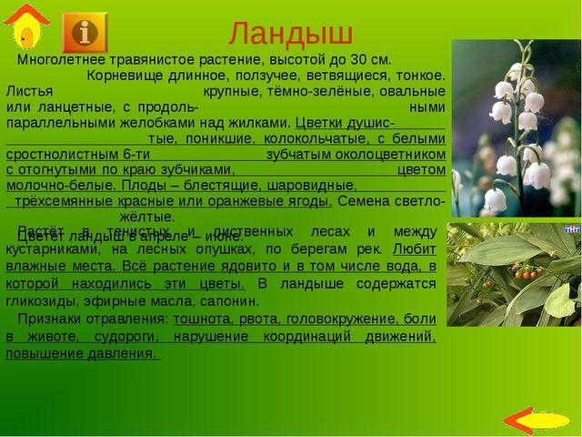 Ландыш Многолетнее травянистое растение, высотой до 30 см. Корневище длинное,...