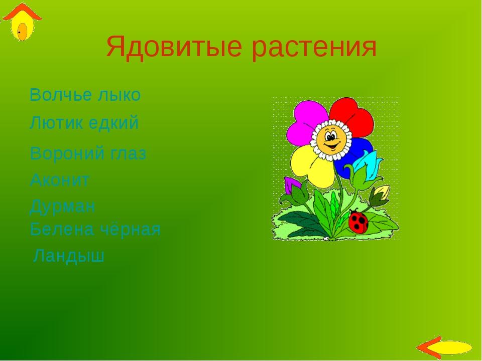 Ядовитые растения Волчье лыко Вороний глаз Лютик едкий Дурман Аконит Ландыш Б...