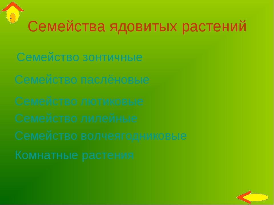 Семейства ядовитых растений Семейство зонтичные Семейство паслёновые Семейств...