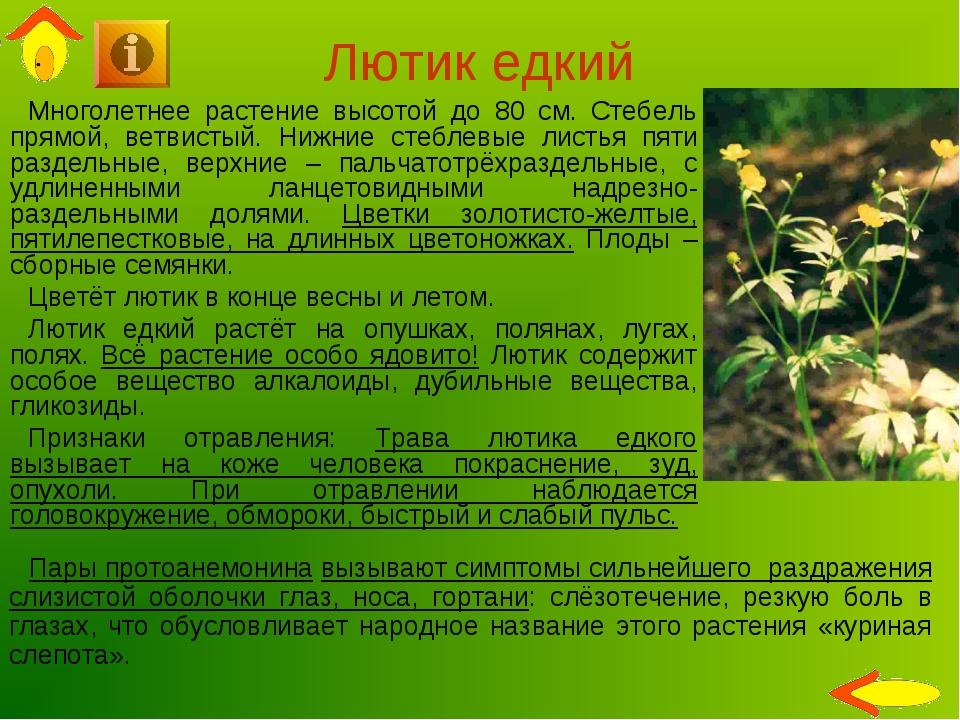 Лютик едкий Многолетнее растение высотой до 80 см. Стебель прямой, ветвистый....