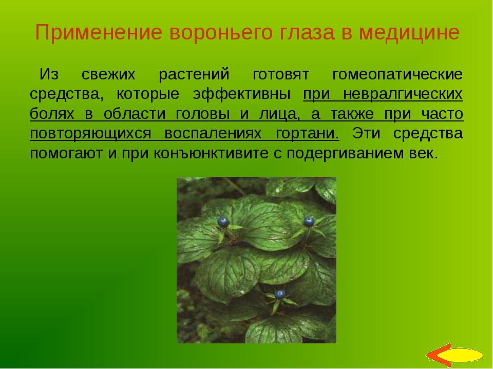 Применение вороньего глаза в медицине Из свежих растений готовят гомеопатичес...
