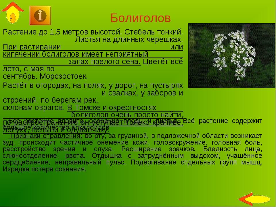 Болиголов Растение до 1,5 метров высотой. Стебель тонкий. Листья на длинных ч...