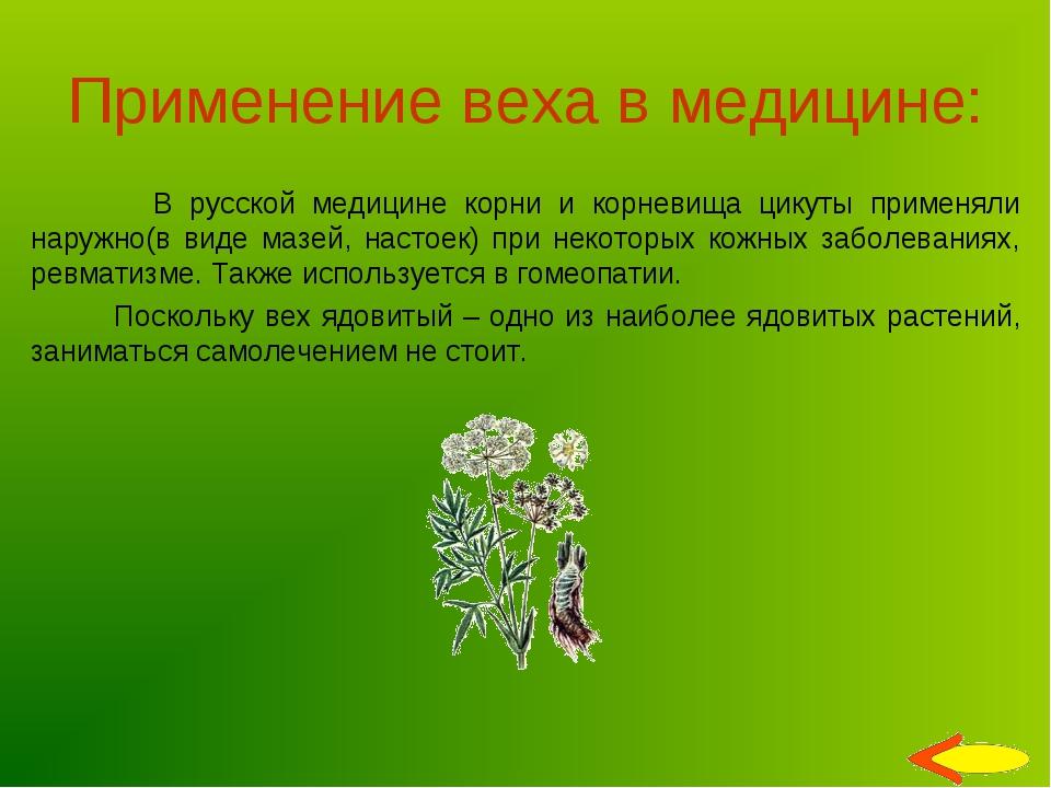 Применение веха в медицине: В русской медицине корни и корневища цикуты приме...