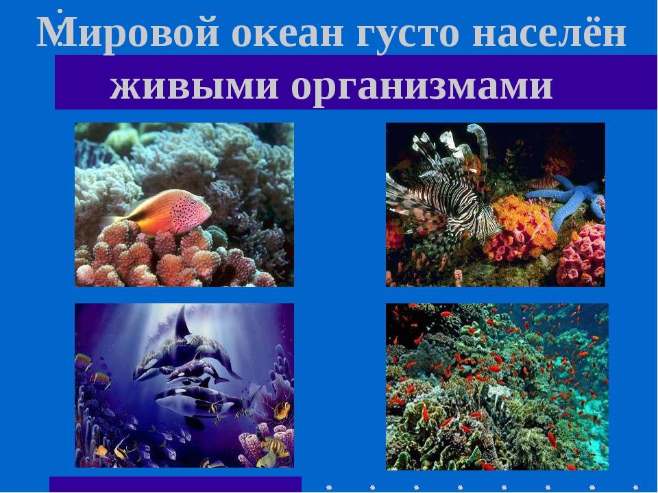 Мировой океан густо населён живыми организмами