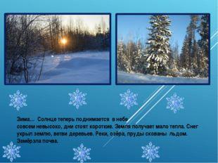 Зима… Солнце теперь поднимается в небе совсем невысоко, дни стоят короткие. З