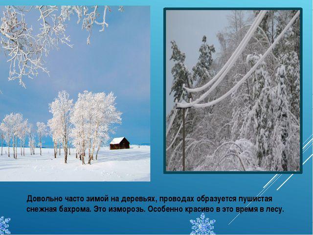 Довольно часто зимой на деревьях, проводах образуется пушистая снежная бахром...