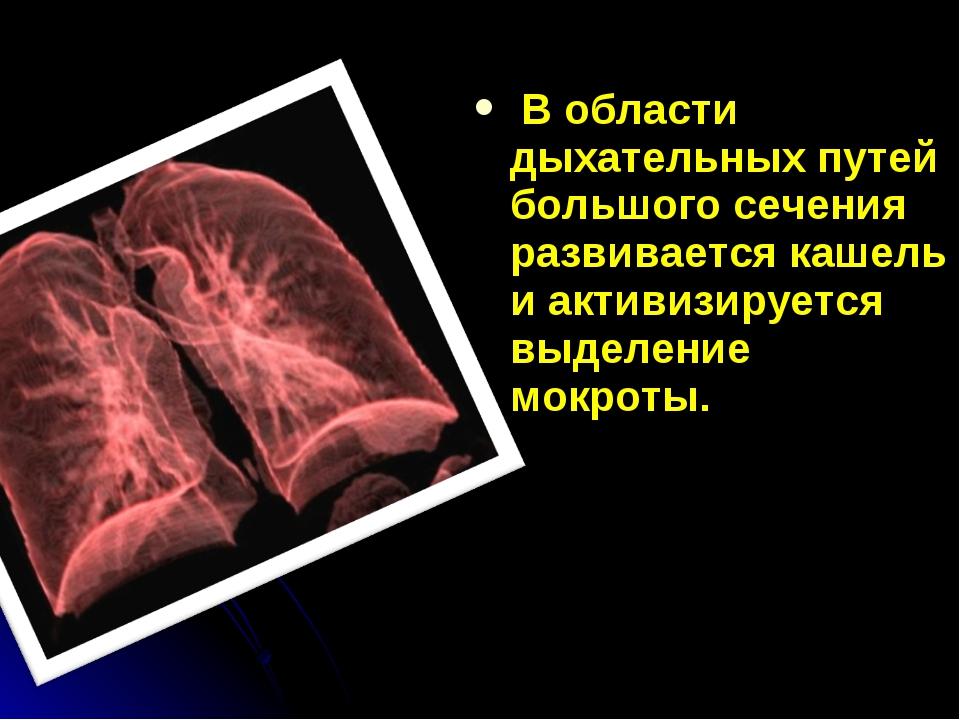 В области дыхательных путей большого сечения развивается кашель и активизиру...