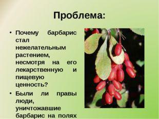 Проблема: Почему барбарис стал нежелательным растением, несмотря на его лекар