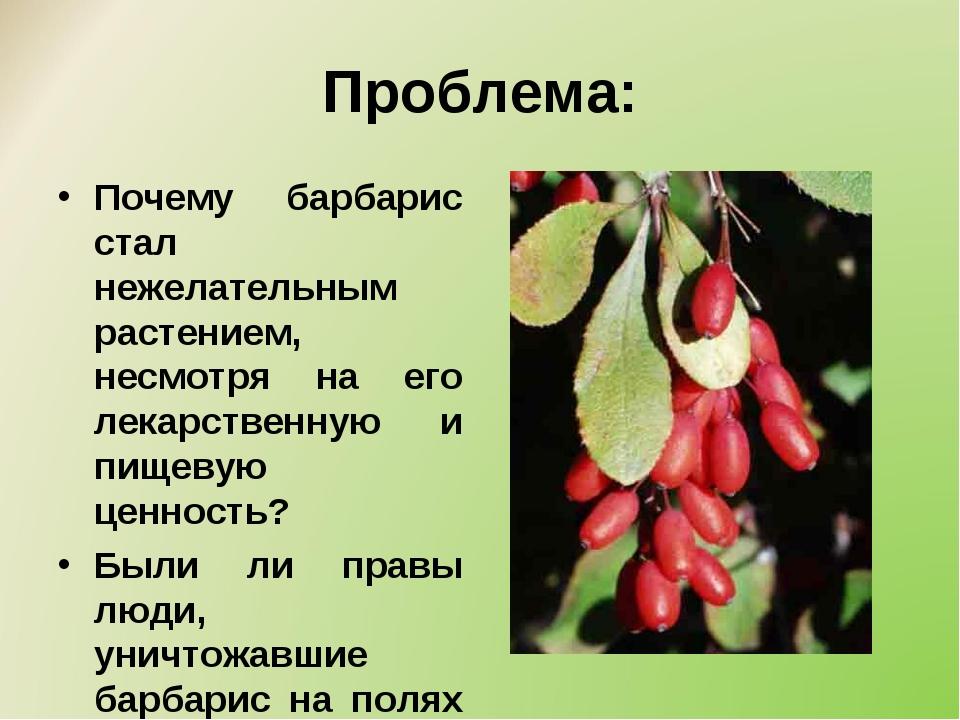 Проблема: Почему барбарис стал нежелательным растением, несмотря на его лекар...