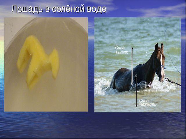 Лошадь в солёной воде