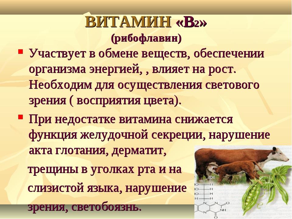 ВИТАМИН «В2» (рибофлавин) Участвует в обмене веществ, обеспечении организма э...
