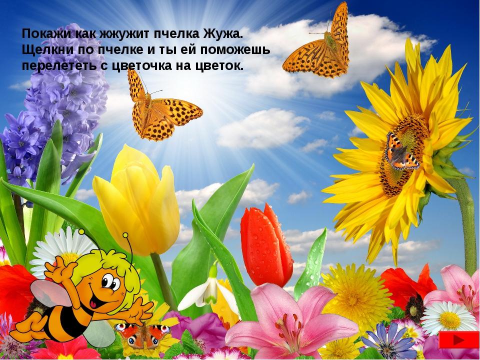 Покажи как жжужит пчелка Жужа. Щелкни по пчелке и ты ей поможешь перелететь с...