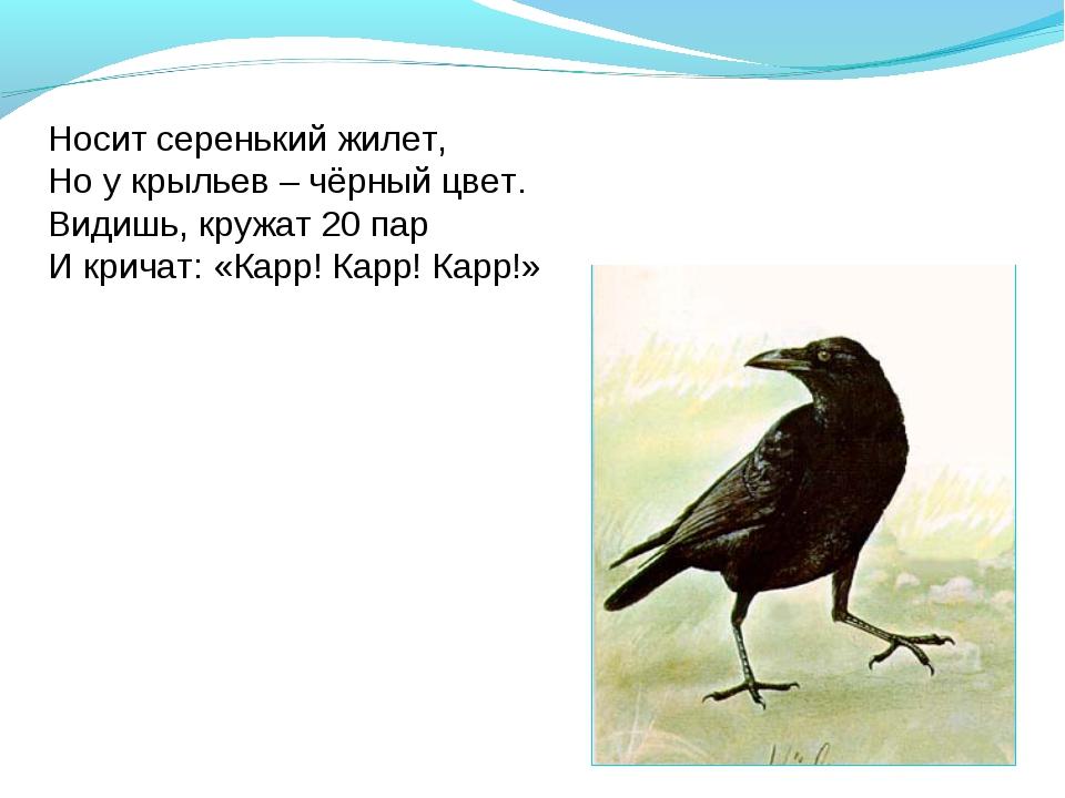 Носит серенький жилет, Но у крыльев – чёрный цвет. Видишь, кружат 20 пар И кр...