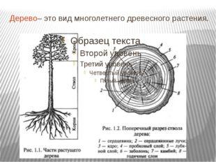 Дерево– это вид многолетнего древесного растения.