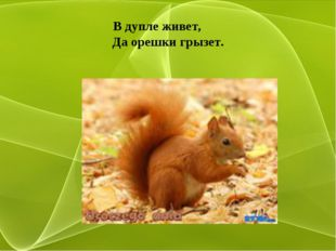 В дупле живет, Да орешки грызет.