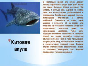 В настоящее время эта акула держит пальму первенства среди всех рыб Земли как