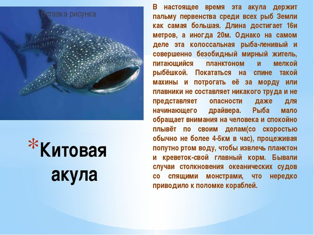 В настоящее время эта акула держит пальму первенства среди всех рыб Земли как...