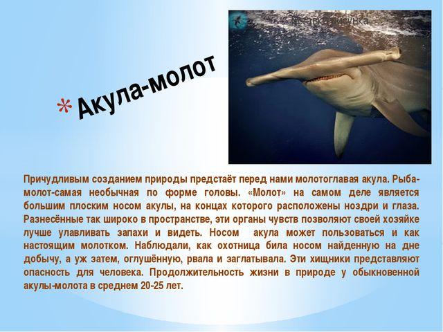 Причудливым созданием природы предстаёт перед нами молотоглавая акула. Рыба-м...