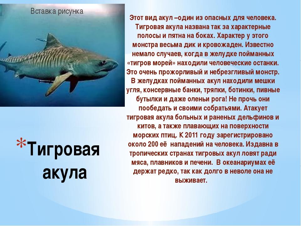 Этот вид акул –один из опасных для человека. Тигровая акула названа так за ха...