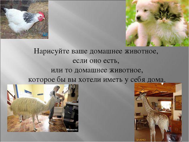 Нарисуйте ваше домашнее животное, если оно есть, или то домашнее животное, ко...