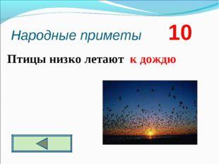 Народные приметы 10  Птицы низко летают к дождю