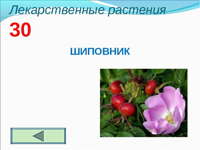 Лекарственные растения 30 ШИПОВНИК