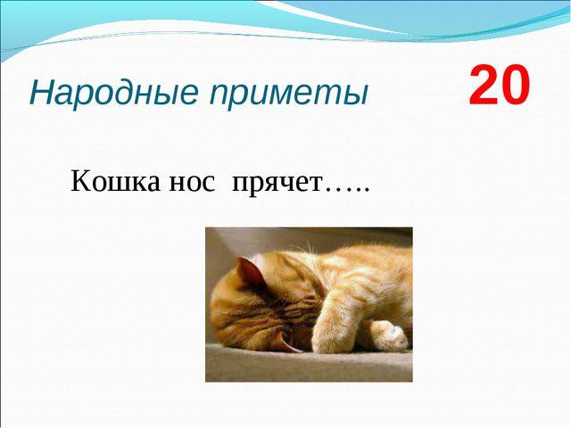 Народные приметы 20 Кошка нос прячет…..