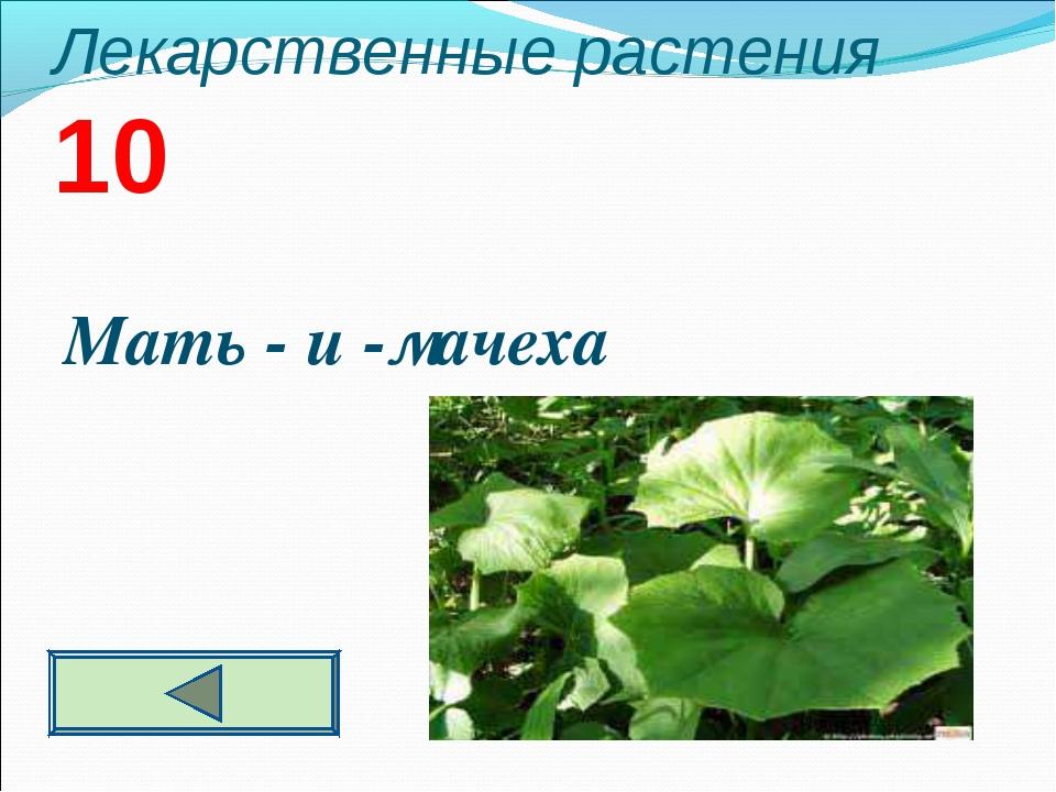 Лекарственные растения 10 Мать - и -мачеха