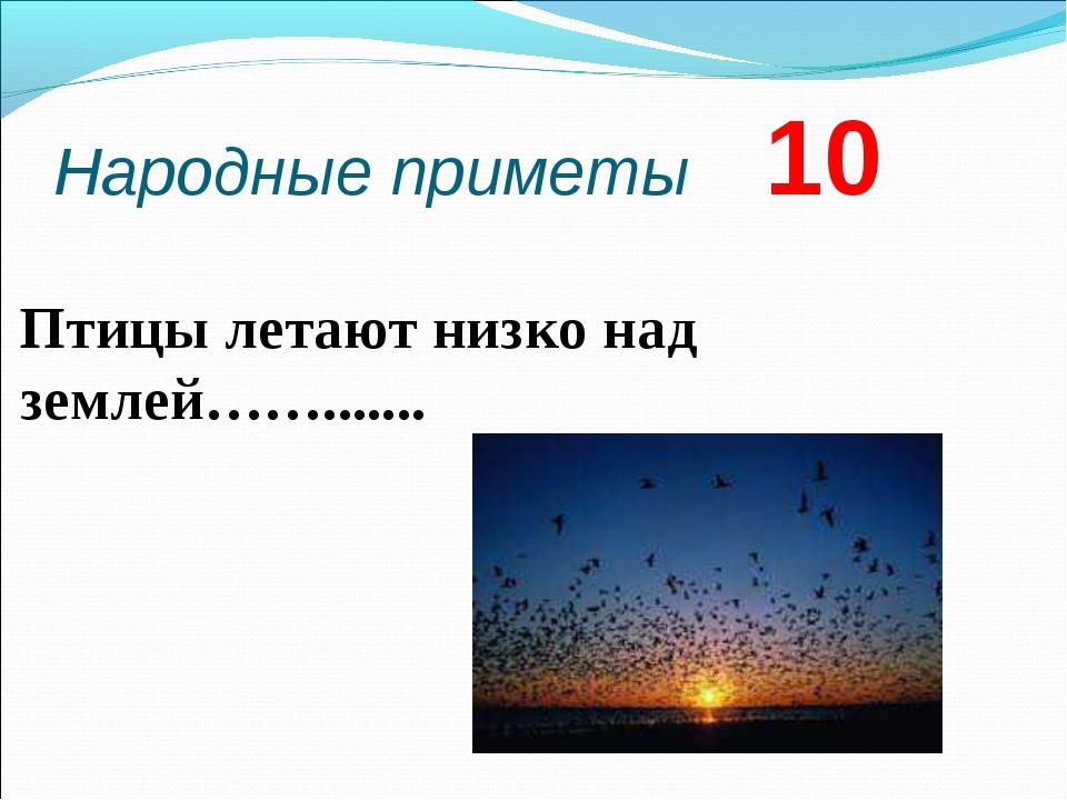 Народные приметы 10 Птицы летают низко над землей…….......