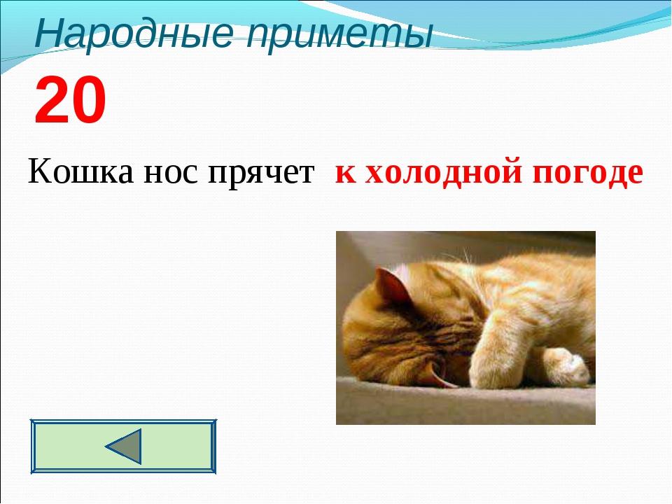Народные приметы 20  Кошка нос прячет к холодной погоде