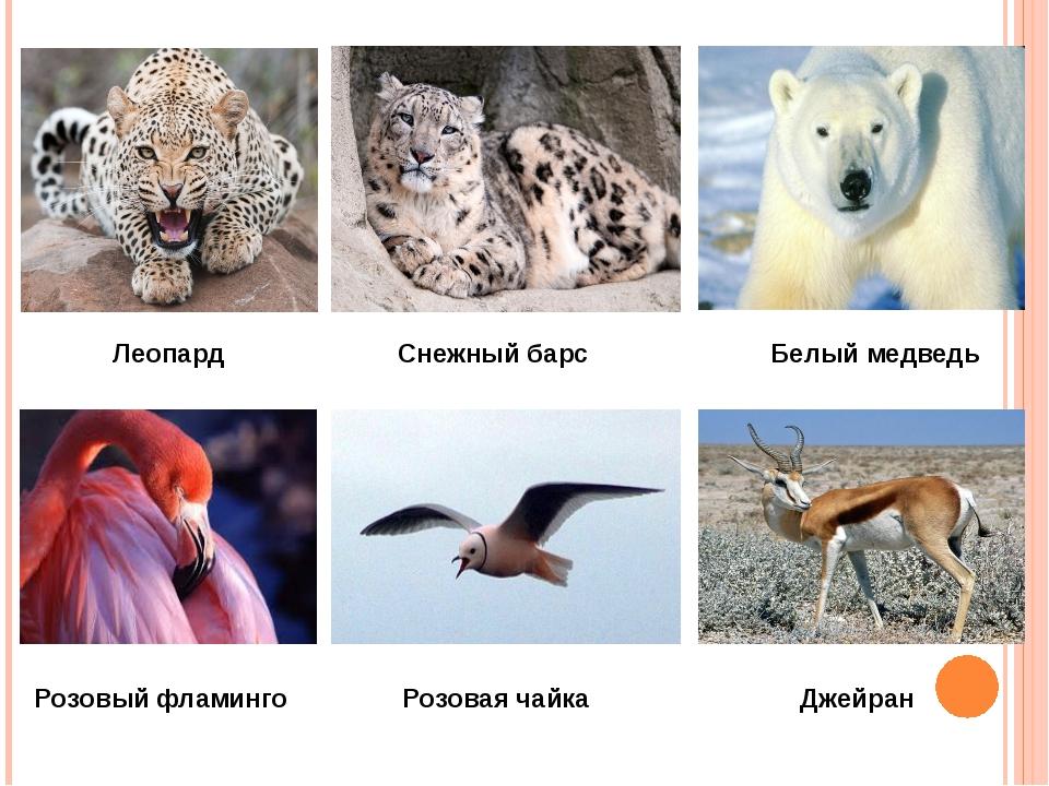 Леопард Снежный барс Белый медведь Розовый фламинго Розовая чайка Джейран