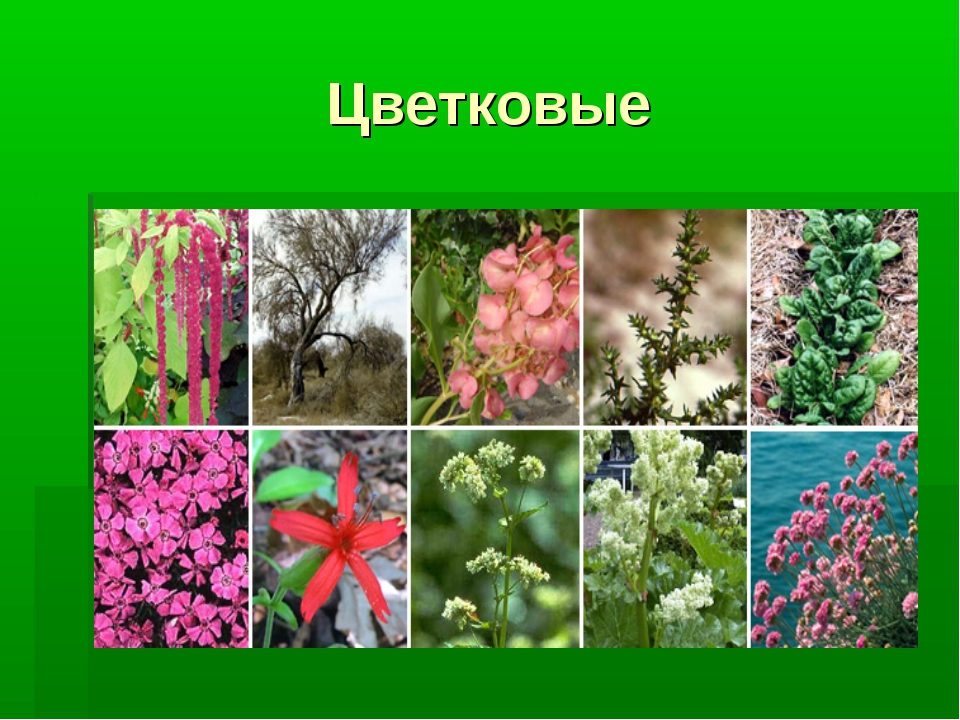 все картинки и название цветковые жили третьем подъезде