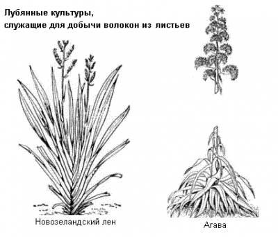 http://rusalka7.ucoz.ru/_ld/1/s81397839.jpg
