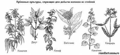 http://rusalka7.ucoz.ru/_ld/1/s94723030.jpg