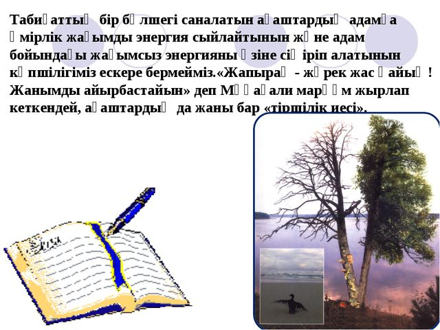 Табиғаттың бір бөлшегі саналатын ағаштардың адамға өмірлік жағымды энергия сы...