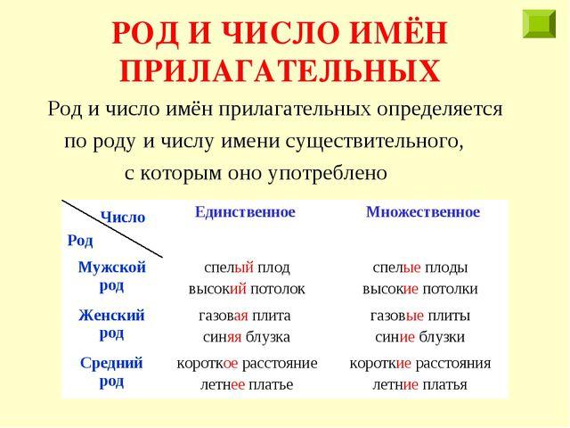 РОД И ЧИСЛО ИМЁН ПРИЛАГАТЕЛЬНЫХ Род и число имён прилагательных определяется...