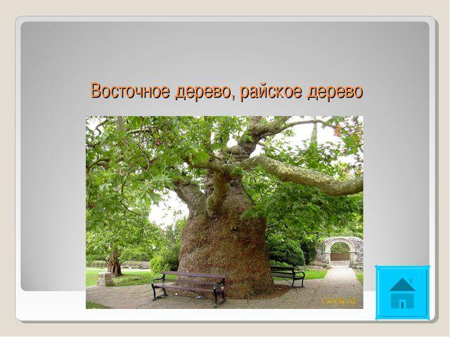 Восточное дерево, райское дерево