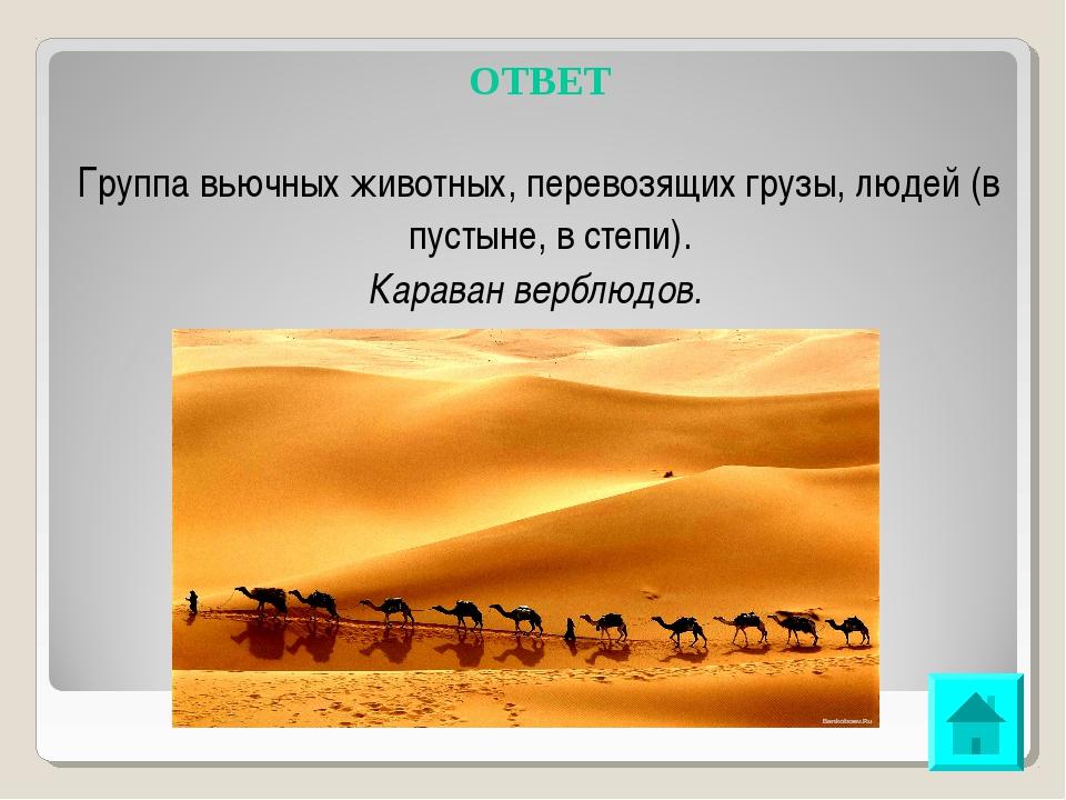 ОТВЕТ Группа вьючных животных, перевозящих грузы, людей (в пустыне, в степи)....