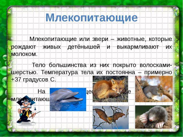 Млекопитающие Млекопитающие или звери – животные, которые рождают живых детён...