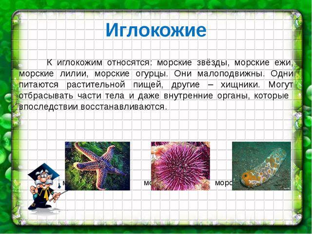 Иглокожие К иглокожим относятся: морские звёзды, морские ежи, морские лилии,...