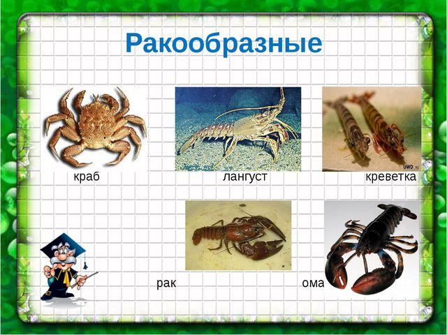 Ракообразные краб лангуст креветка рак омар