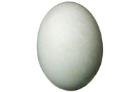 duck_egg