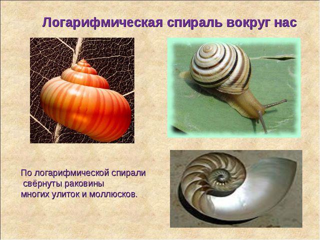 Логарифмическая спираль вокруг нас По логарифмической спирали свёрнуты ракови...