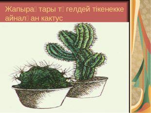 Жапырақтары түгелдей тікенекке айналған кактус